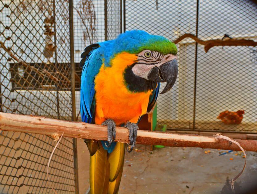 cornell skop progetto wildlife